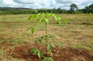 Plantage aus einem grünen Investment