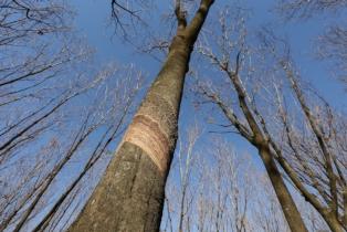 Höhe eines Baums